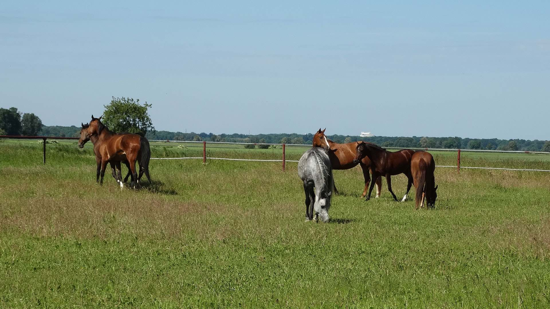 Konie-Osrodek_jezdziecki-HARMONY_FARM-Szewce