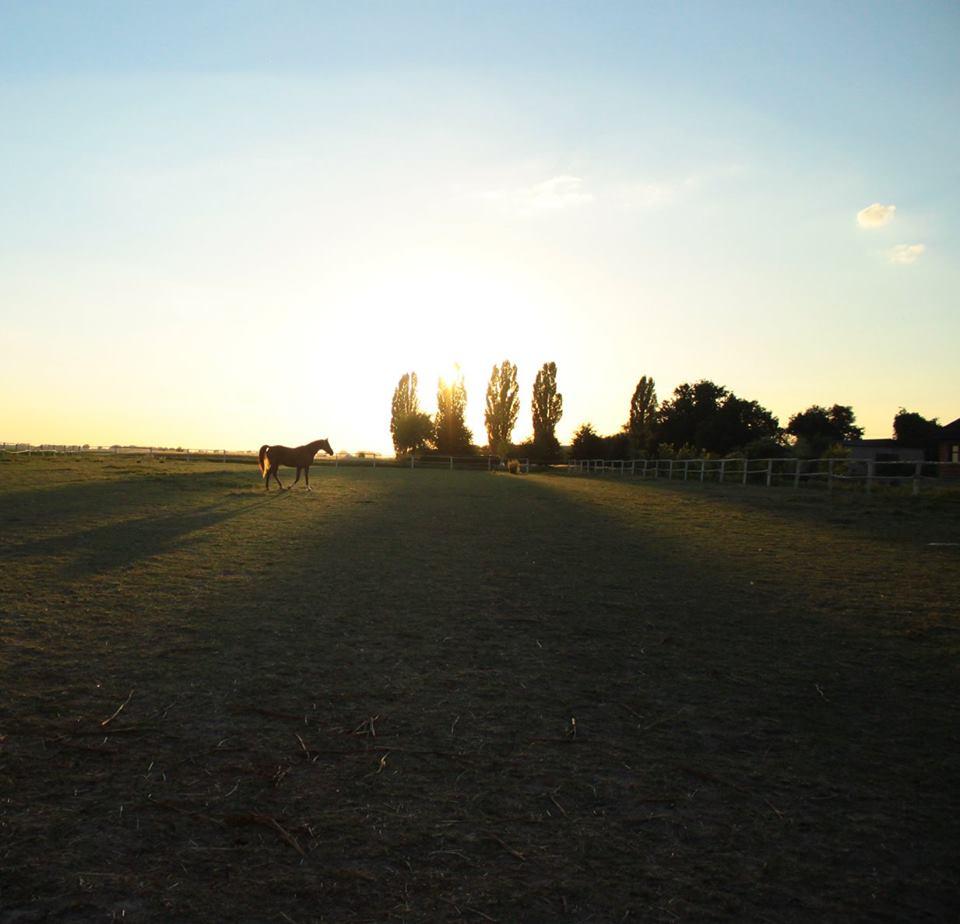 Stadnina-Pensjonat_dla_koni-HARMONY_FARM-Szewce