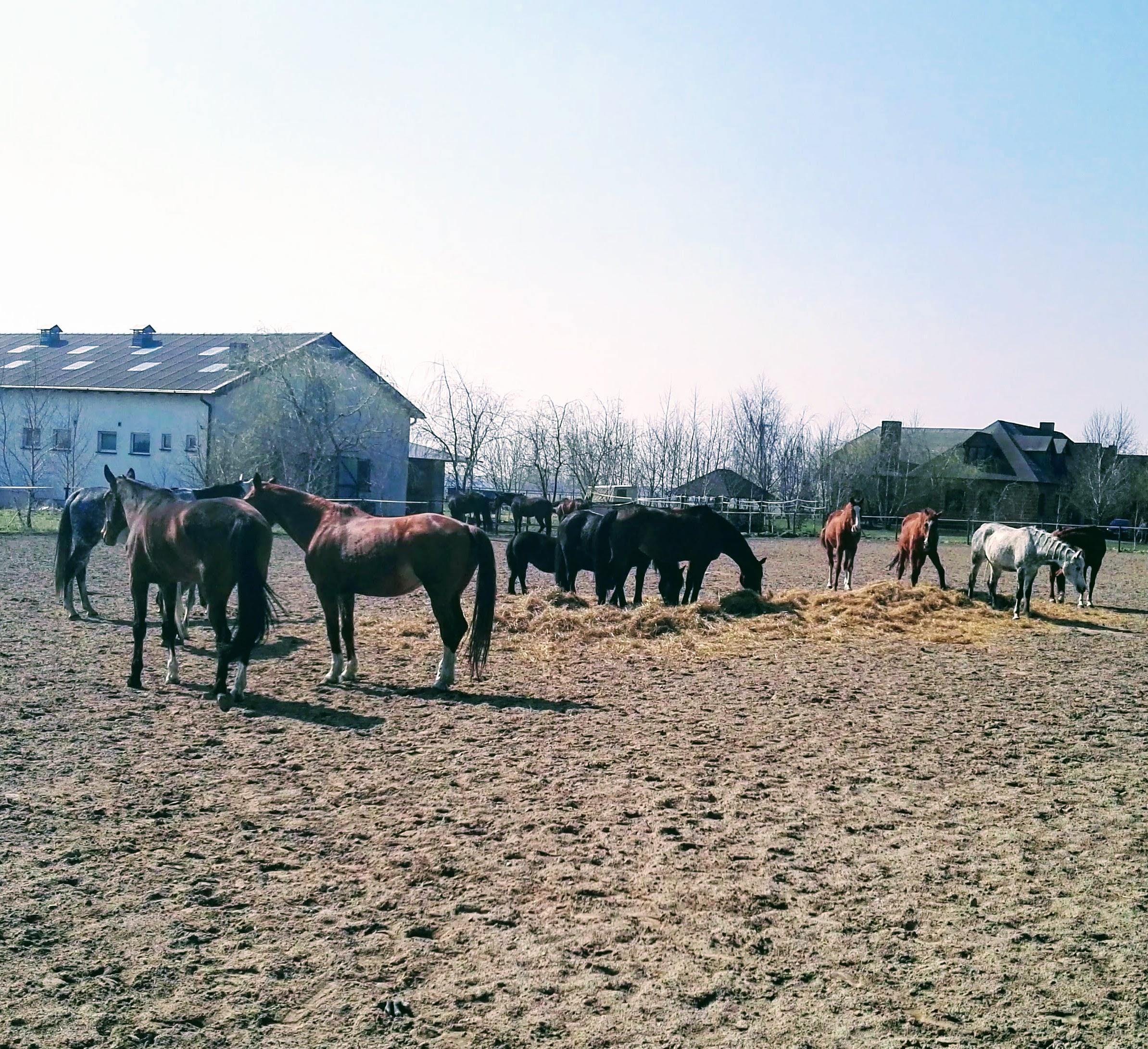 Stajnia-Pensjonat_dla_koni-HARMONY_FARM-Szewce