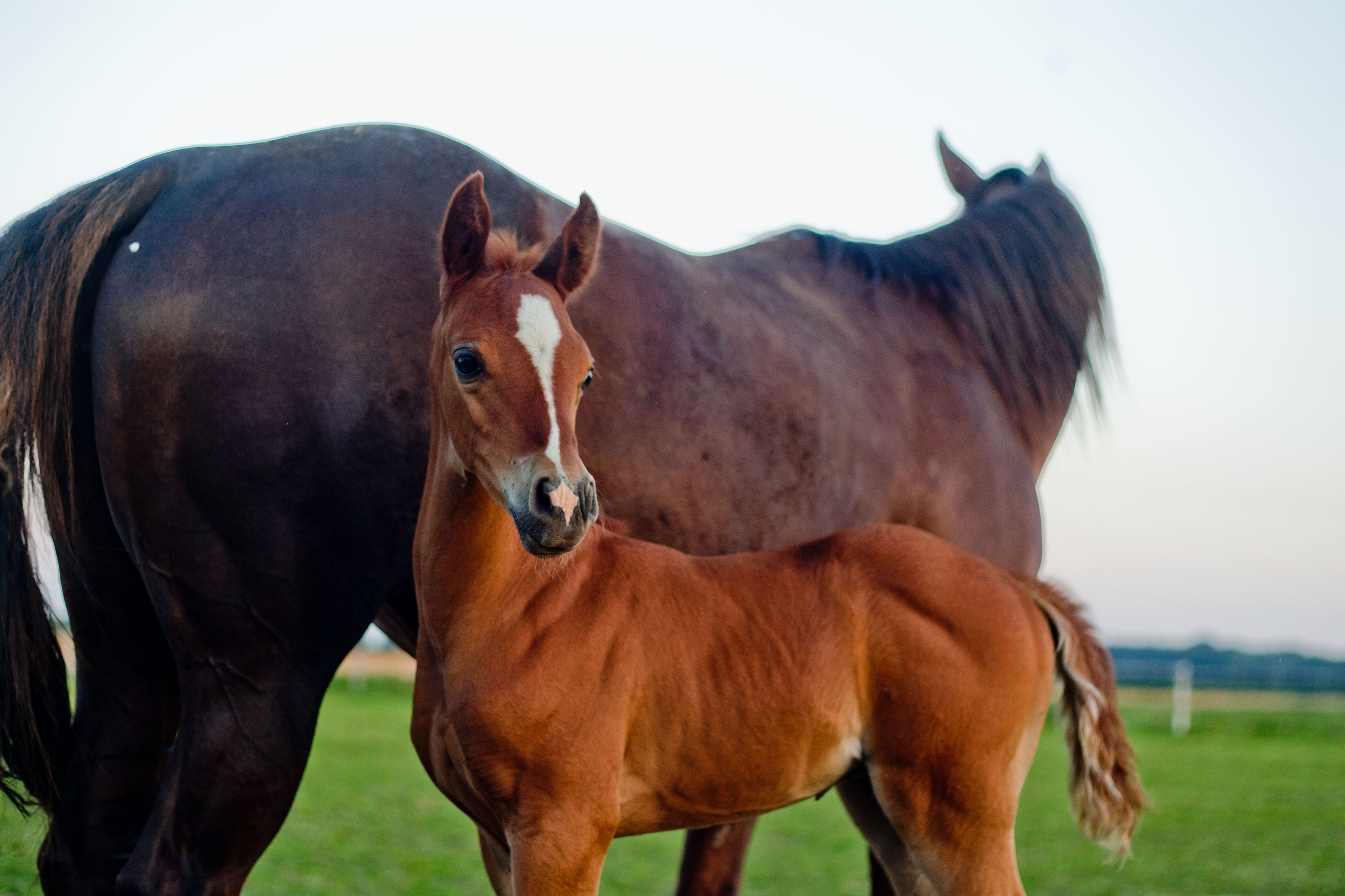 Konie-Pensjonat_dla_koni-HARMONY_FARM-Szewce