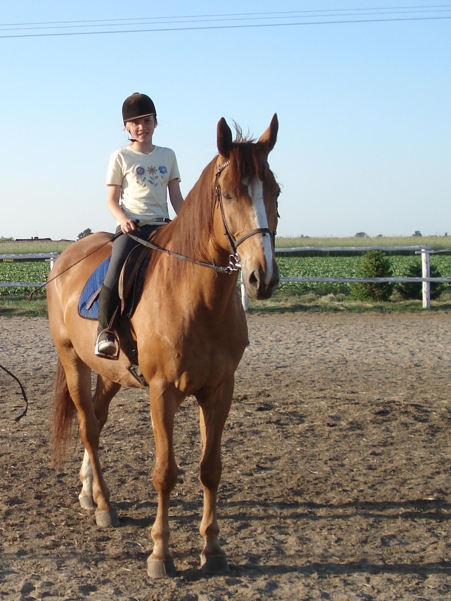 Konie-Obozy_jezdzieckie-HARMONY_FARM-Szewce